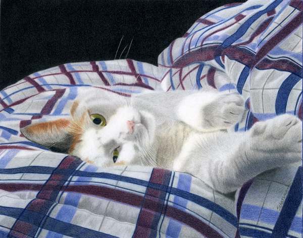 Cat Nap - Colored Pencil Drawing by Canadian Realist Artist Melissa Schatzmann
