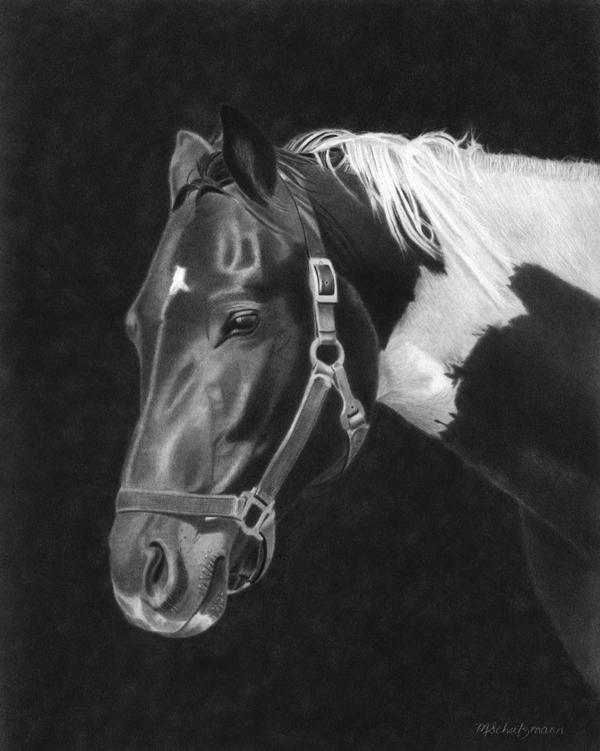 Horse Study - Graphite Pencil Drawing by Canadian Artist Melissa Schatzmann