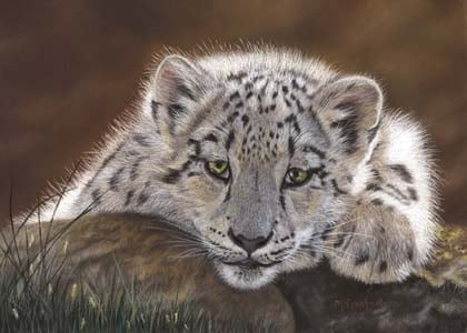Chalk Pastels - Snow Leopard - Realistic Drawing