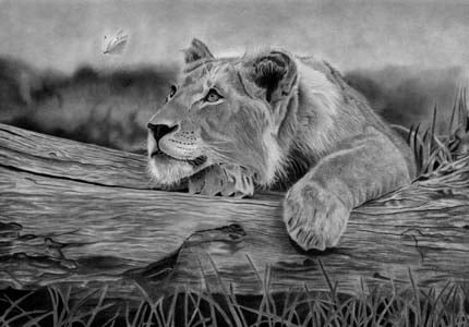 Pencil Drawing - The Beauty of Patience - Melissa Schatzmann