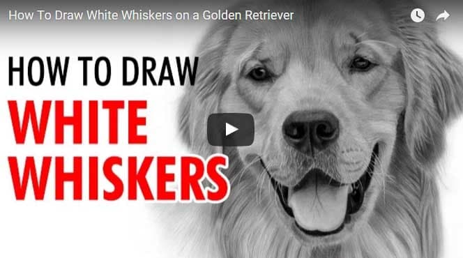 Realistic Pencil Drawing - Learn How to draw white whiskers