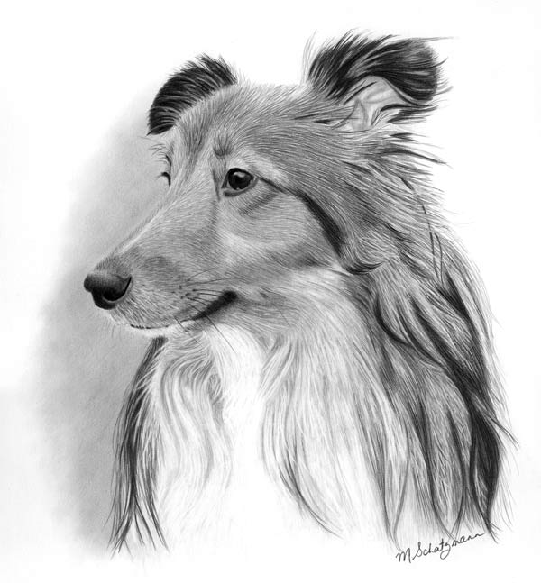 Riley - Graphite Pencil Drawing by Canadian Realist Artist Melissa Schatzmann
