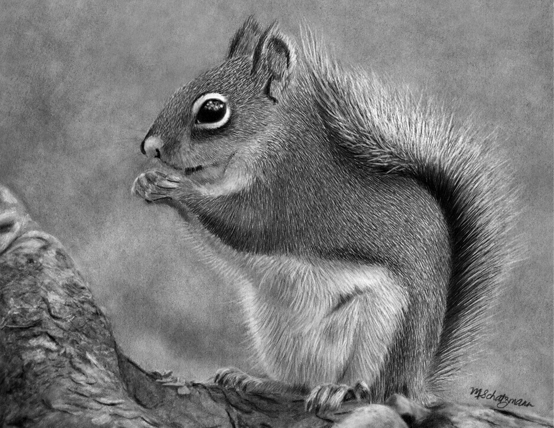 Uncategorized How To Draw A Realistic Squirrel realistic pencil drawing backyard squirrel squirrel