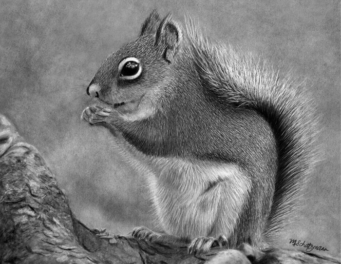 squirrel-original