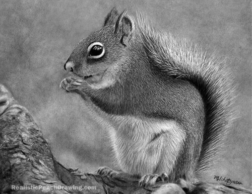Draw A Squirrel - Drawing Ideas