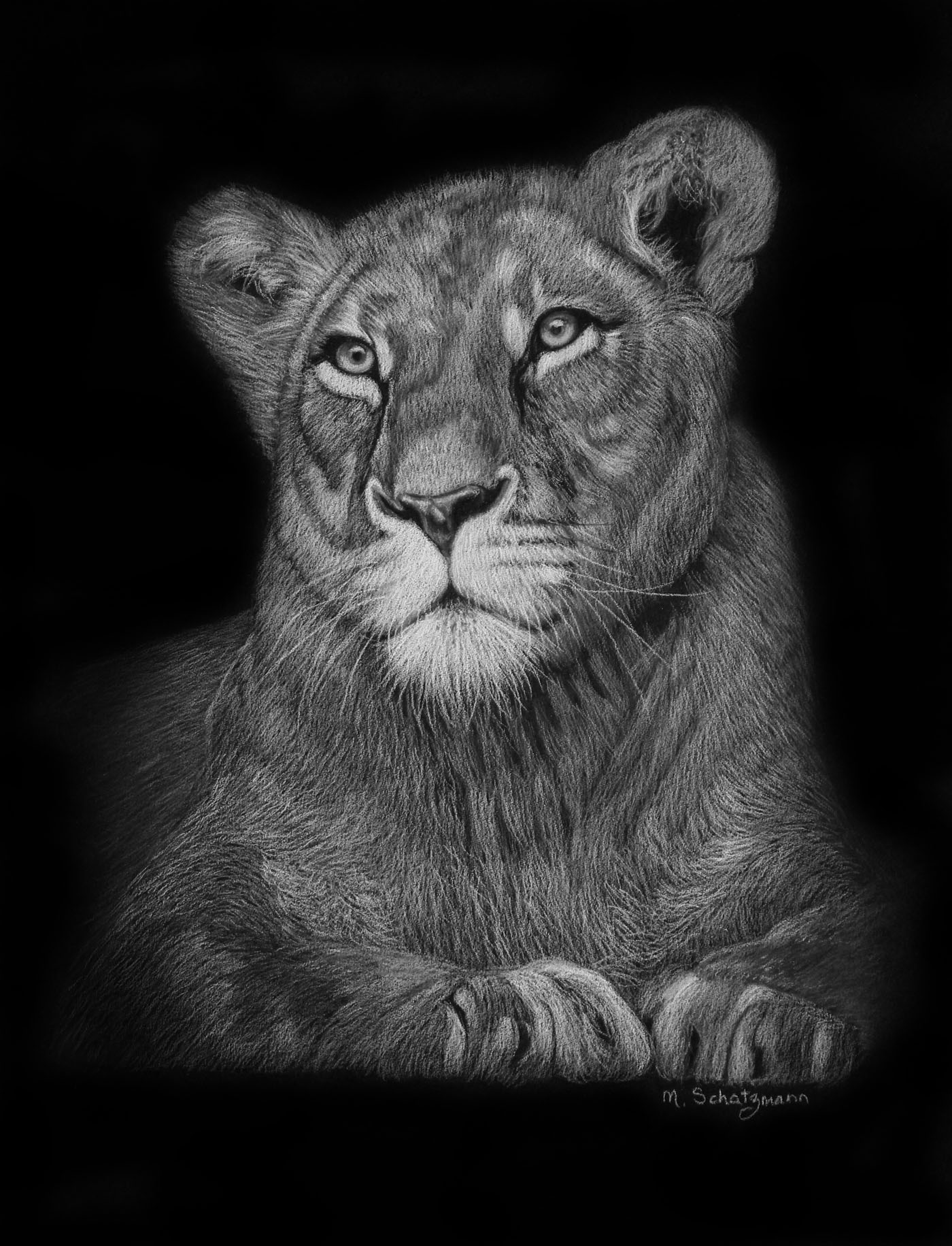 lioness- white on black